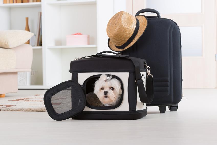 Prendre l'avion avec un chien