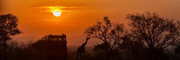 Safari africain