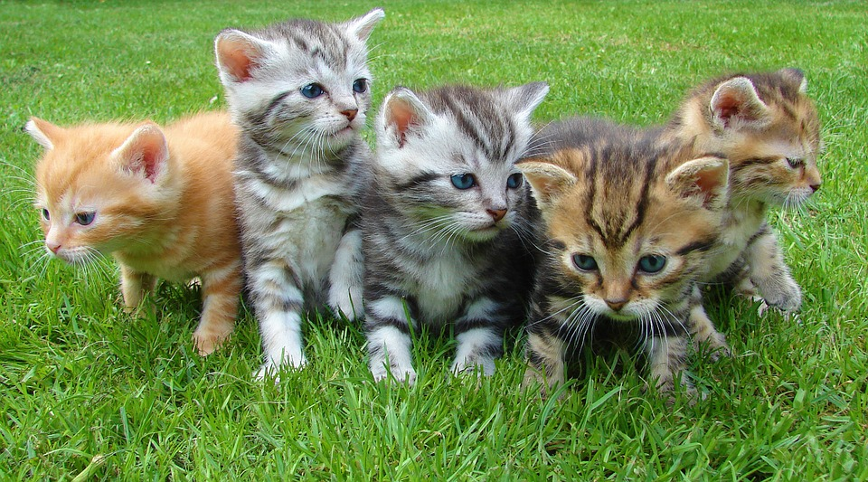 chatons en voyage