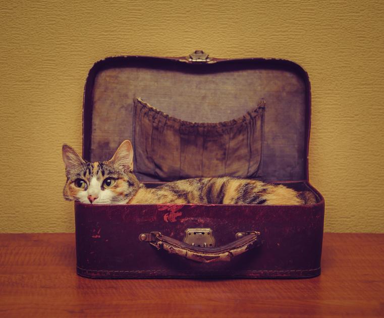 Voyager en avion avec un chat